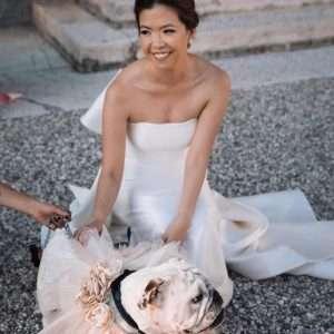 cane matrimonio